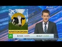 Обеспеченная фермерскими продуктами, криптовалюта появилась в Татарстане