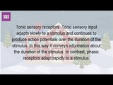 What Are Tonic Receptors