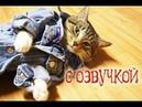Приколы с котами озвучка животных Первый сборник кота Мурзика Domi Show