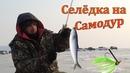 Рыбалка на Самодур Ловля Селёдки на Бороду Устья Реки Суйфун Тавричанка Приморье