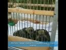 Житель города Шумерля обнаружил в своей вентиляции птенца голубя.