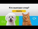 Спор Кота и Собаки.