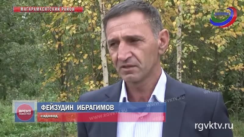 Дагестанский садовод лезгин награжден медалью Золотой фонд региона