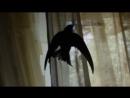 Ёбаный хуесос с крыльями атакует топ хату