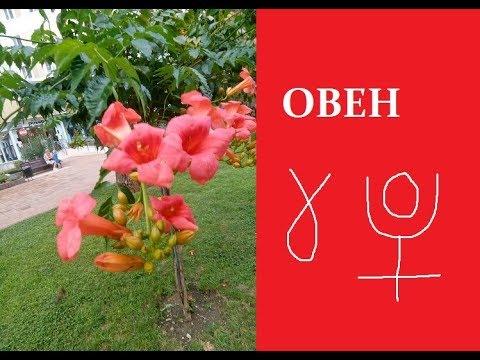 Овен, основной принцип и влияние на дома гороскопа