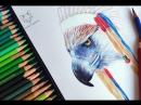 Рисую орла в роуче, продолжение 🦅