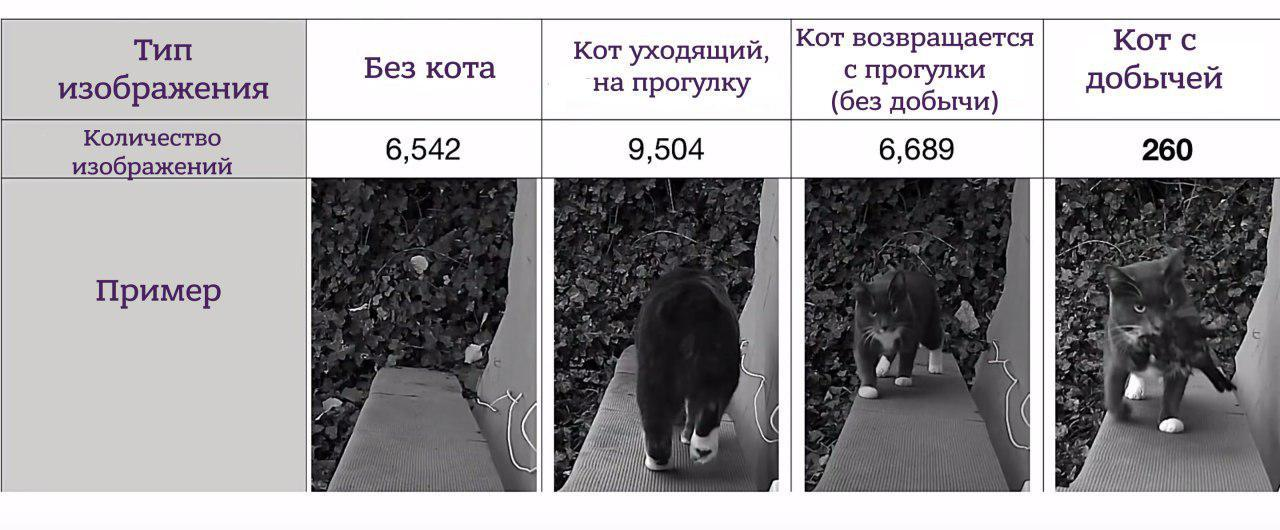 Нейросеть решает, когда пустить кота в дом