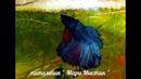 УРА МАЛЬКИ ПОПЛЫЛИ !! петушокрыбка халфмунмальки ( ПИТОМНИК МАРИ МИСТИК )