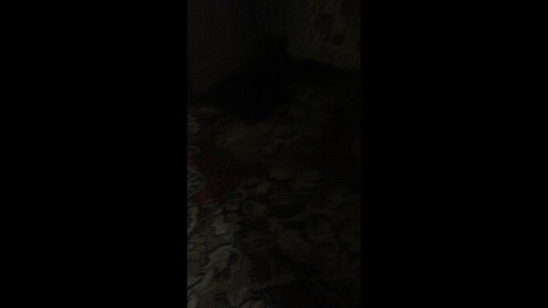 Ксения Интуншина — Live