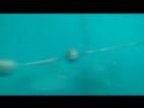 Пляж Moonlight / Dakapo - под водой