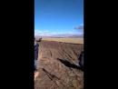 скачка 6 км (11.10.18)от 3-х и старшего возраста лошадей башкирской породы (финиш)