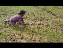 Камбоджа. Блокбастер с рисовых полей. Cambodia, children and snakes. Blockbuste