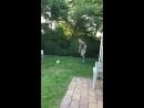 Olly James kicking soccer ball