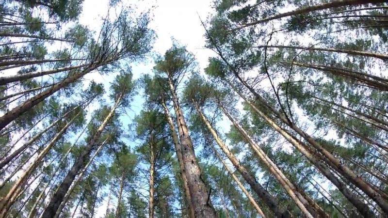 Сплав по Кондурче Прогулки в сосновом лесу