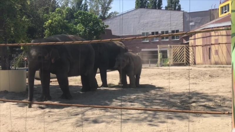 Слоненок Эколь из Ростовского зоопарка