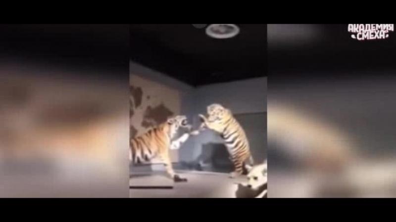 Обкуренный лев))