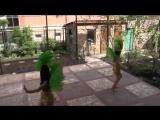 Шоу-балет Рахат Лукум Краснодар Бразилия Рио КАРНАВАЛ дуэт 22847