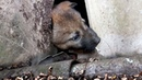 Abandoned Puppy Stuck Around His Neck.. Rescue Stories Puppy Rescue Old House Destroyed