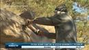 Жители Башкирии утверждают что увидели дракона