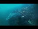 Акула просила помощи у людей Дайверы спасли акулу Редкие кадры