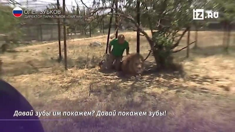 Как Вожак Стаи лев Лорд  Сделал Олега Зубкова своим другом... О дружбе с Львами
