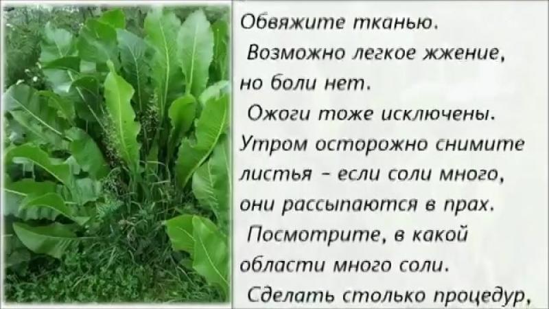 Листья_хрена_Рецепт_от_боли_в_спине_и_суставах