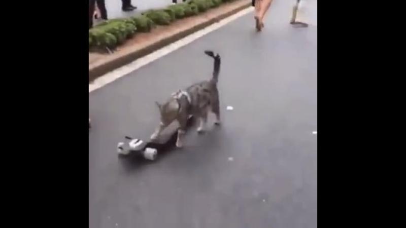 Просто кот на скейте! Ничего особенного, листайте дальше