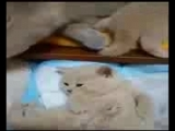 [v-s.mobi]ПРИКОЛЫ С КОТАМИ ТОПовая подборка 2017Best Funny Cats Videos Compilation Try Not To Laugh.3gp