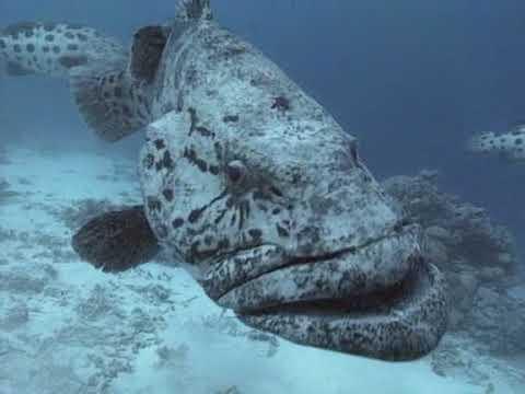 BBC Прогулки под водой Большой Барьерный риф
