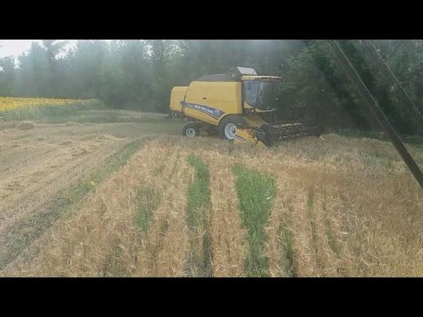 Косим ярый ячмень сеяный с люцернейNewHolland TC5.90