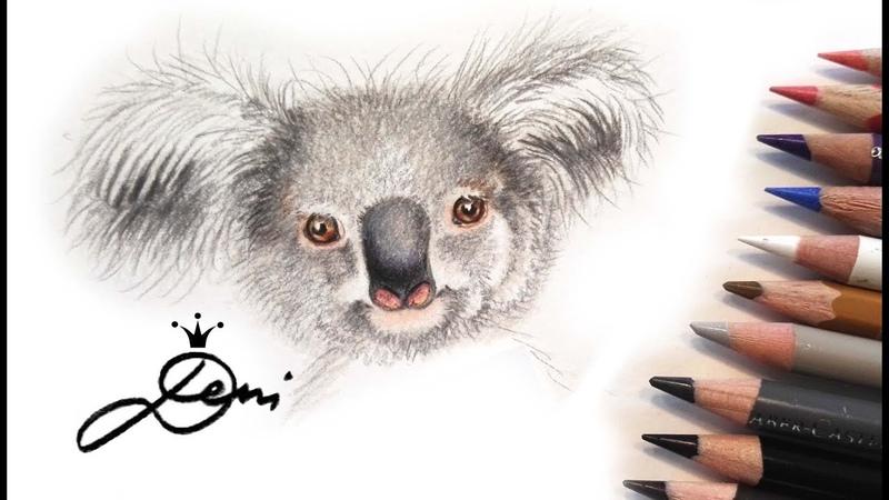 Koala Bär zeichnen mit Buntstiften 🐨 How to Draw a Koala Bear 🐨 как се рисува Коала мечка