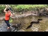 Spearfishing INCREDIBLY Huge Eel Fish So Awesome