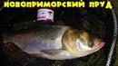 Рыбалка в Новоприморке. Новоприморский пруд. Ловля карпа и толстолоба.