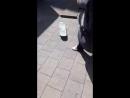 Пингвин на доске