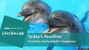 Key words and phrases: dolphinariums, in captivity, human-animal bonds, in the wild