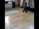 2710). 05.08.2017 - Кошка Вирджиния (теперь Бусинка) нашла дом (видео из дома)