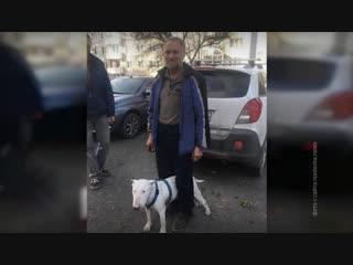 В Красноярске после 17 дней поисков нашелся пенсионер, вышедший погулять с собакой