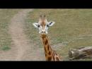 Пражский зоопарк 🦉🦄🐥🐵🦋🐯🐰