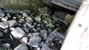 Алушта Сброс канализации в море Профессорский уголок