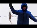 Зимняя рыбалка в Западной Сибири