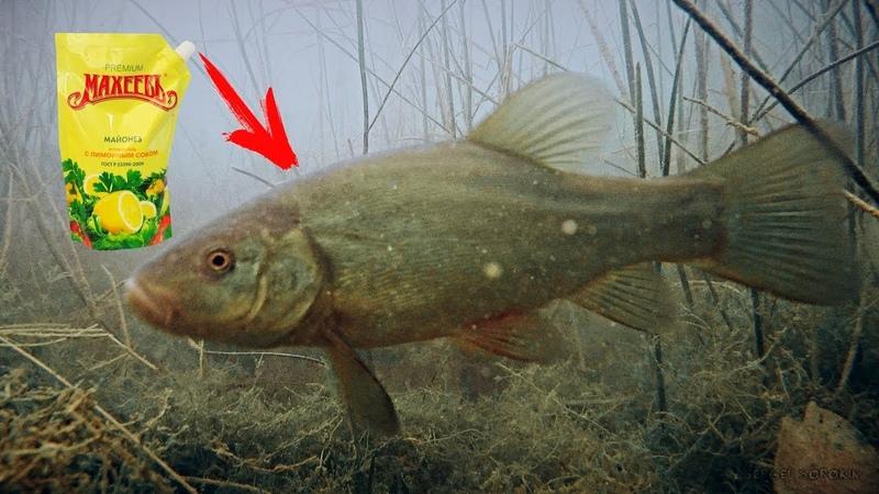 Реакция рыбы на МАЙОНЕЗ Линь пескарь Подводная съемка