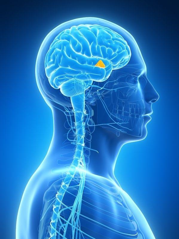 Какова роль отрицательной обратной связи в эндокринной системе?