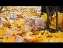 рыжий котик и осень