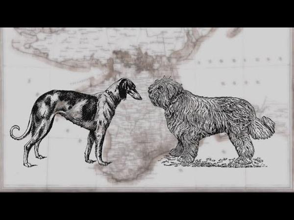 Из-за депортации крымских татар в Крыму вымерли две породы собак
