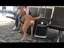 Service dog senses and responds to owner's oncoming panic attack