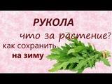 Руккола (рукола).Салат с руколойЗаготовка на зиму