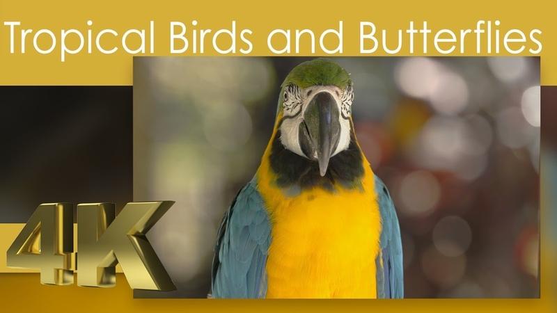 4K Tropical Birds and Butterfly Filmed in Worlds Largest Bird Aviary Jurong Bird Park Singapore