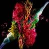"Kouhei Nakama on Instagram: ""botanical simulation fluid cg motiongraphics art softimage arnoldrender aftereffects photoshop abstract ex..."