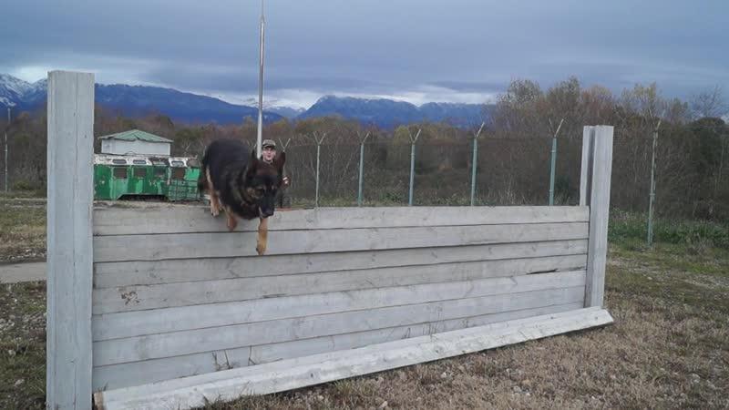 Служебные собаки российских военных на базе в Абхазии