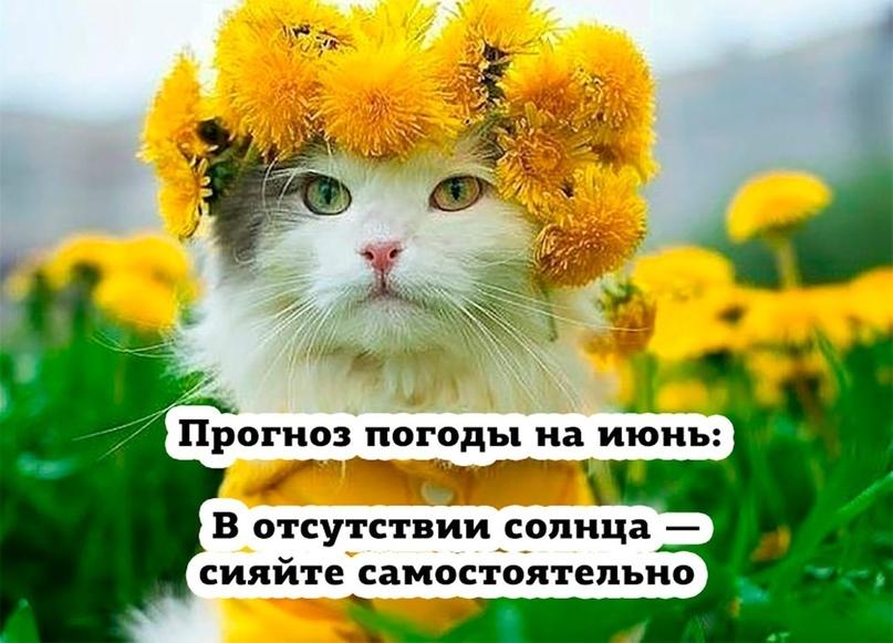 https://pp.userapi.com/c849124/v849124917/1fad/aH4kB4KrQP8.jpg